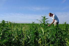 Missouri House by Missouri House Passes Bill To Allow Industrial Hemp Farming News