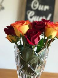 how much does a dozen roses cost roseshire delivers stunning beauty and the beast inspired roses