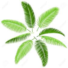 set of palm leaves royalty free cliparts vectors and stock