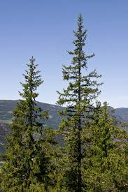 trees top 10 sciencenordic