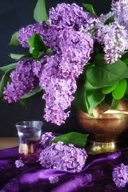 Lilac Flower by 338 Best Lilac Images On Pinterest Lilacs Flowers And Lilac Flowers