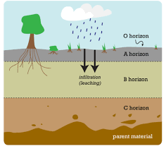 soil horizons and profiles ck 12 foundation