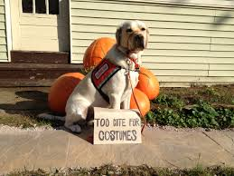 cute happy halloween pictures 11am cute puppy u2014 happy halloween from the puppies at neads