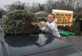 a green christmas southwest michigan tree growers prepare for