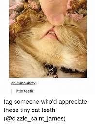 Yellow Teeth Meme - rey little teeth tag someone who d appreciate these tiny cat teeth