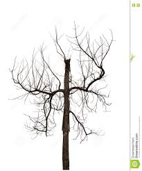 scary halloween white background dead tree withered tree isolated on white background stock photo