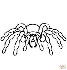 halloween spider coloring pages bigactivities com pictures animal