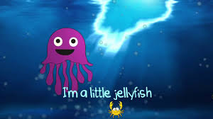 the jellyfish song youtube