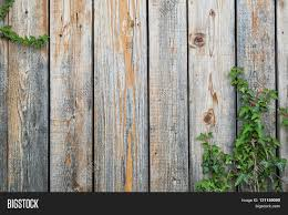 weathered wooden boards backgound with some ivy vines climbing in