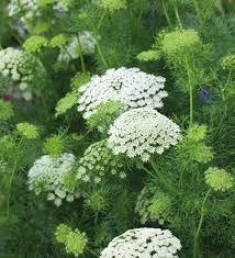 Plant Flower Garden - 25 best white gardens ideas on pinterest white flowers garden