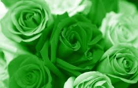 green roses flowers images green roses wallpaper and background photos 26242322