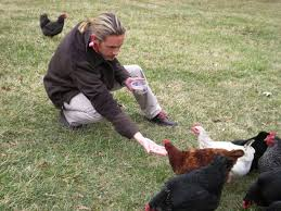 Keeping Free Range Chickens In Your Backyard How To Raise Chickens In Your Backyard The Art Of Manliness