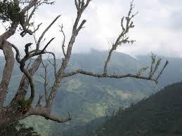 blue mountains jamaica wikipedia