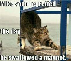 Herding Cats Meme - funny cats videos 1 041 photos pet supplies