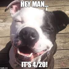 Stoner Dog Meme Generator - simple stoner dog meme generator stoner boe is ready for 4 20