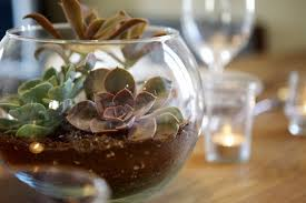 a simple cheap succulent centerpiece apartment therapy