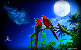 parrots in paradise kealakekua hawaii exotic bird image result for very colorful colors pinterest