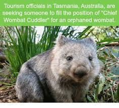 Tasmania Memes - tourism officials in tasmania australia are seeking someone to fill