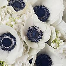 anemones flowers floral trend anemones bald hairstyles flowers and white anemone