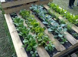 Wood Pallet Garden Ideas 10 Best Gardening Ideas Images On Pinterest Gardening Home And
