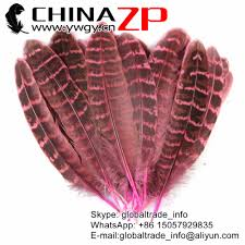 popular hen pheasant buy cheap hen pheasant lots from china hen
