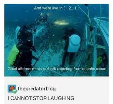 Scuba Meme - wholesome meme dumparoo album on imgur