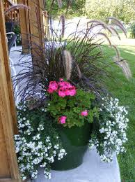 Potted Plant Ideas For Patio by Geraniums Fountain Grass And Bacopa Landscaping Loves Ideas