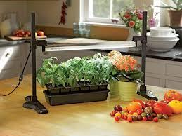 what is the best lighting for growing indoor best light for growing plants indoors hgtv