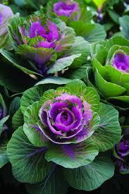 64 best perennial vegetables images on edible garden