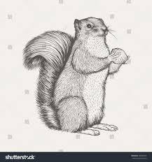squirrel sketch illustration vector stock vector 738099646