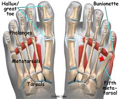 Foot Tendons Anatomy Physical Therapy In In Heart Of Edison For Foot Pain Tailor U0027s Bunion