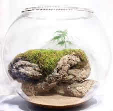 141 best terrariums images on pinterest garden terrarium