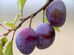 the meaning and symbolism of the word plum