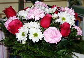 january is the month of the carnation flower blog