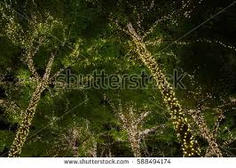 Decorative Trees With Lights Light Tree Stock Images Royalty Free Images U0026 Vectors Shutterstock