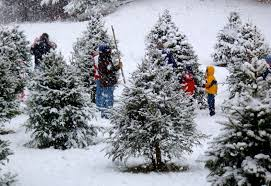 christmas tree farms colorado nyc christmas tree delivery service