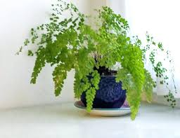 easy flowers to grow indoors easy flowering plants to grow outdoors ubound co