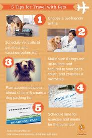 traveling with pets images 5 tips for summer travel with pets jpg