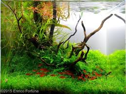 Aga Aquascape 5790 Best Acuarios Images On Pinterest Aquascaping Aquariums