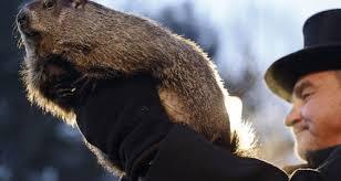 groundhog accurate punxsutawney phil csmonitor