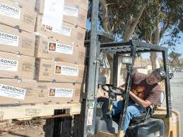 another 10 000 free thanksgiving turkeys distributed by morongo