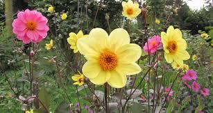 cottage garden flowers perennial garden late summer garden phlox