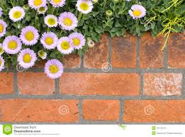 wall flowers brick wall with flowers stock photo image of flower 10113414