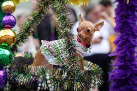 958 best mardi gras with the dogs images on pinterest bichon