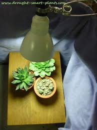 grow lights supplemental light sources for succulent plants