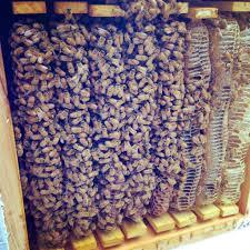 natural beekeeping beekeeping with small children milkwood