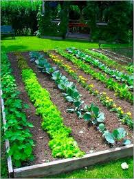 Home Vegetable Garden Design Ideas Home Design Ideas - Home and garden designs 2