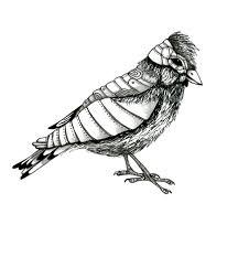 sketch wesley bird art