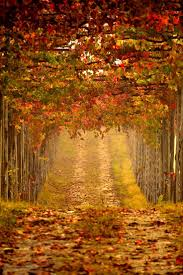 Autumn Colors 200 Best Autumn Images On Pinterest Autumn Fall Fall And Autumn