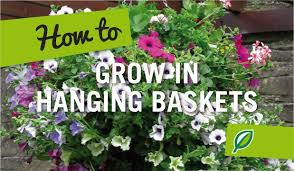 Best Plants For Hanging Baskets by Garden Design Garden Design With Hometalk Best Plants For Hanging